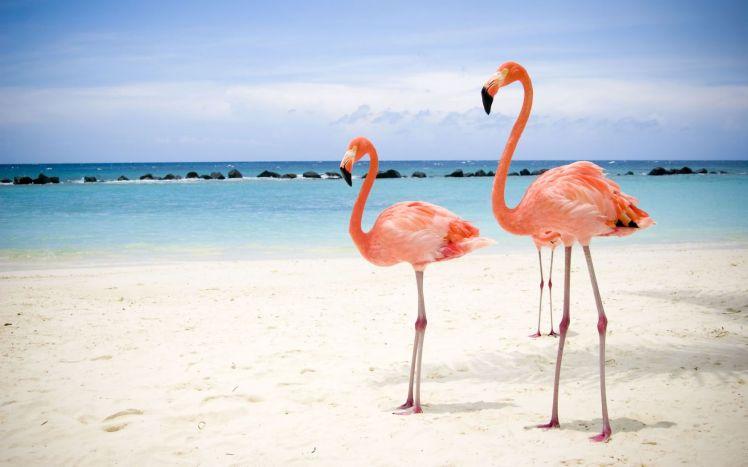 cayo coco flamingos