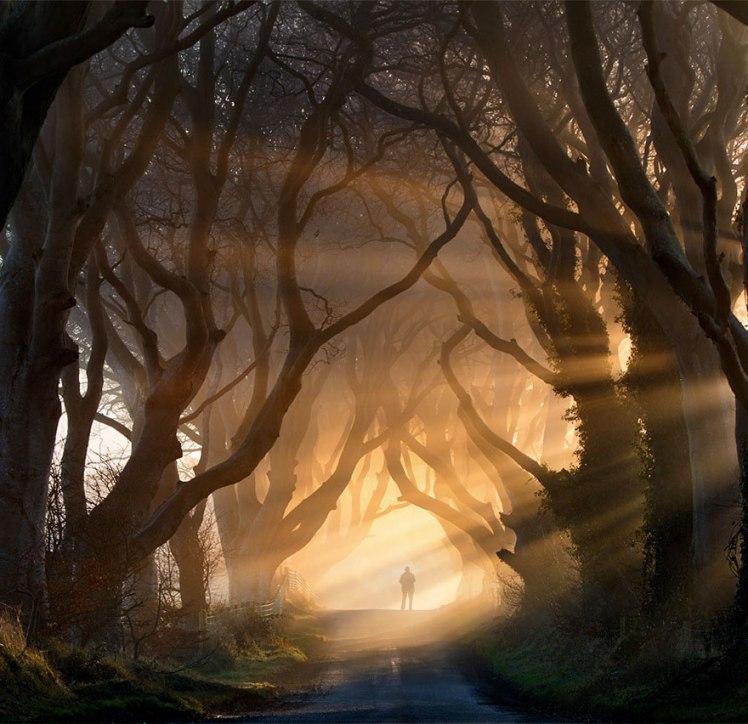Dark Hedges, Northern Island